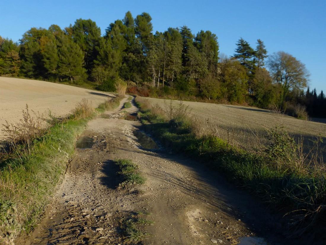 Caminar-de-Manresa-a-Vic-Ton-Granero-i-Jordi-Lafon-39