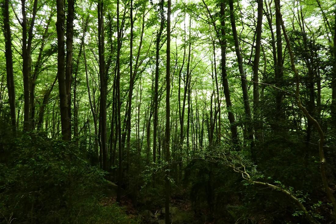 Deriva-Mussol-Camí-RAL-de-Vic-a-Olot-a-peu-51